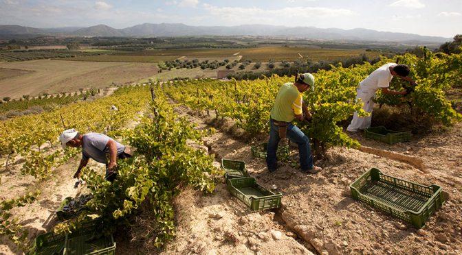 2011 Argiolas, Ungrera Cannonau di Sardegna, Sardinien, Italien