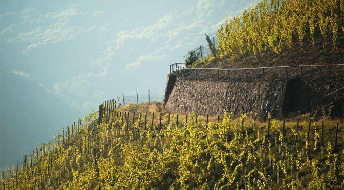 2012 Josten & Klein, Pinot Noir, Ahr, Tyskland