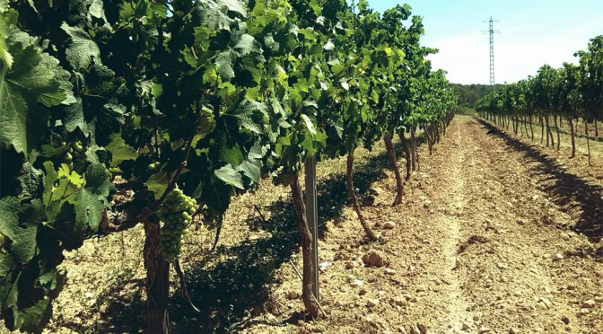 2013 Vins del Massis, Macizo, Catalonien, Spanien