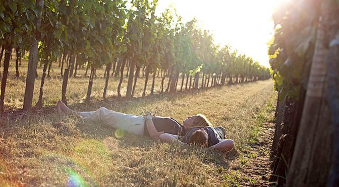 2012 Weingut Markowitsch, Pinot Noir, Carnuntum, Østrig