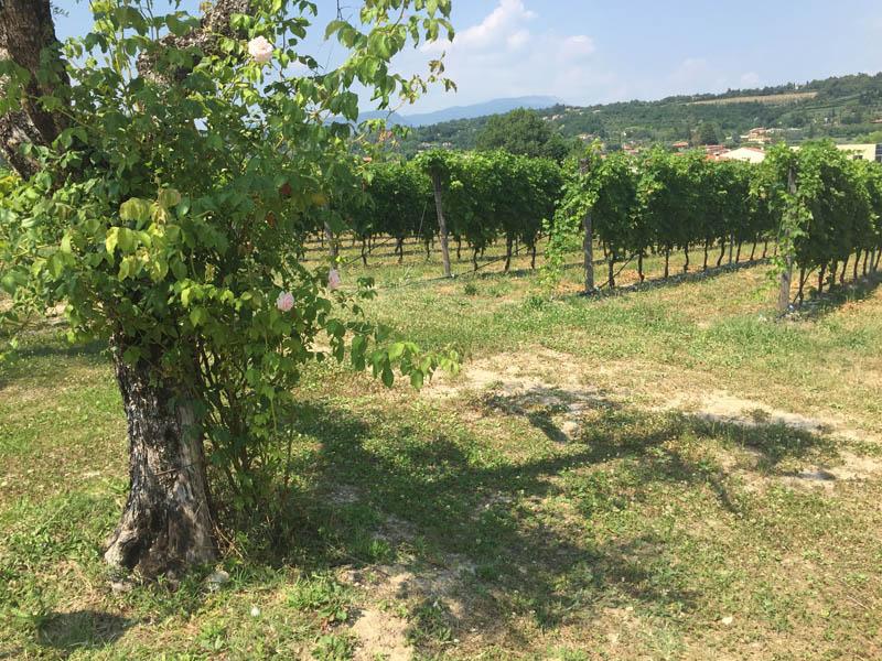 Rozzardi vinmarker