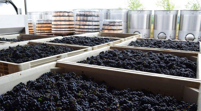 2013 Bergström Wines, Cumberland Reserve Pinot Noir, Oregon, USA