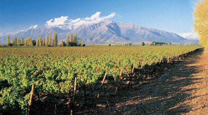 2013 Vinâ San Esteban, In Situ Carmenère Vineyard Selection, Aconcagua, Chile