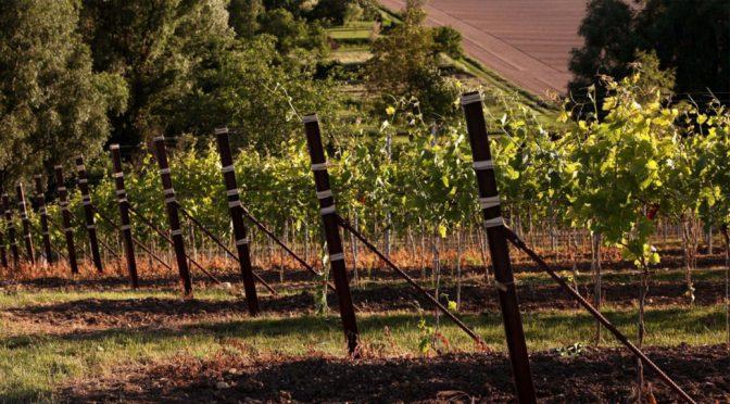 2012 Weingut Wageck Pfaffmann, Gutsweincuvée Rot, Pfalz, Tyskland
