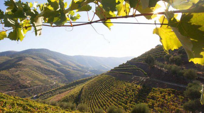 2014 Quinta Vale D. Maria, VVV Branco, Douro, Portugal