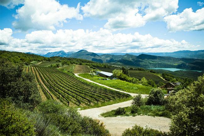 castell-dencus-winery