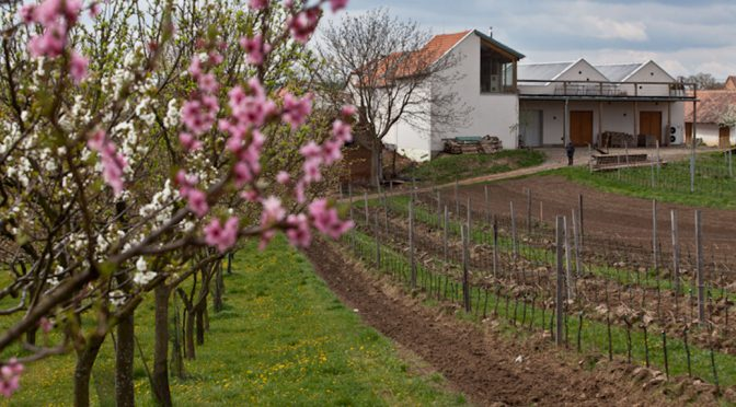 2014 Vinařství Krásná Hora, Pinot Noir Terrior, Moravia, Tjekkiet