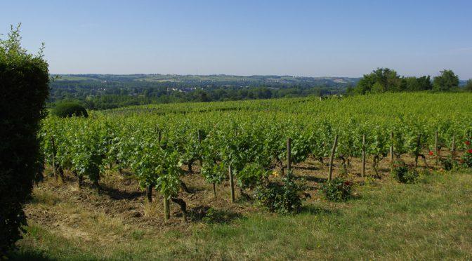 2014 Domaine de la Motte, Coteaux du Layon Rochefort, Loire Frankrig