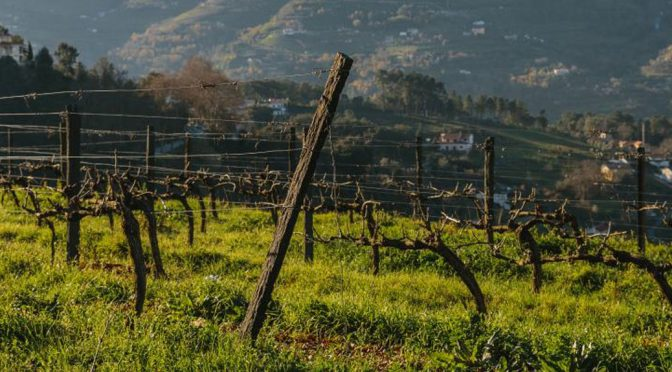 2015 A&D Wines, Espinhosos, Minho, Portugal