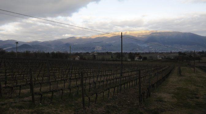 2015 Bocale, Trebbiano Spoletino Umbria IGT, Umbrien, Italien