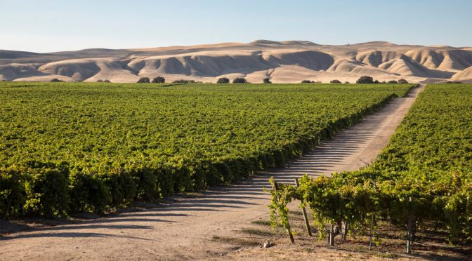 2012 Purple Cowboy Wines, Tenacious Red, Californien, USA