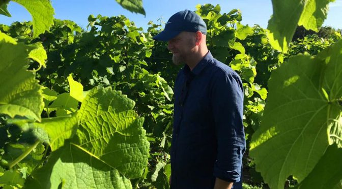 2016 Klitgaard Vin, Pinot Noir Précoce, Fyn, Danmark