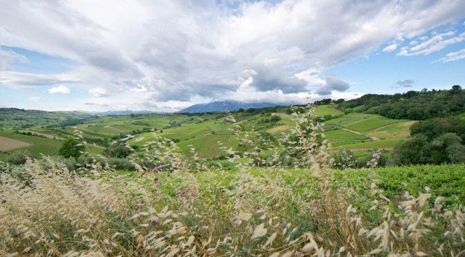 2016 Feudi Bizantini, Passofino Pecorino, Abruzzo, Italien