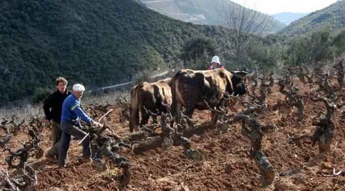 2015 Bodegas Mengoba, La Vigne de Sancho Martín, Bierzo, Spanien