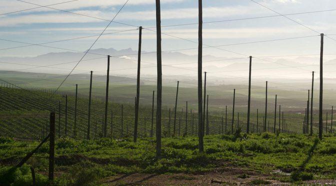 2010 Boekenhoutskloof, Porseleinberg, Western Cape, Sydafrika