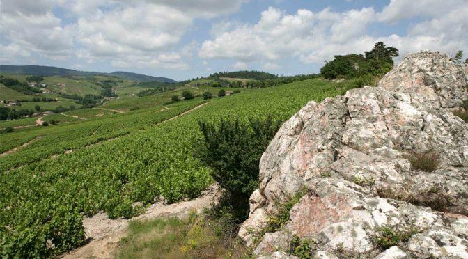 2016 Cave de Fleurie, Fleurie Beaujolais, Bourgogne, Frankrig