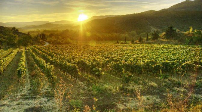 2015 Domaine de la Métairie d'Alon, Pinot Noir La Métairie, Languedoc, Frankrig