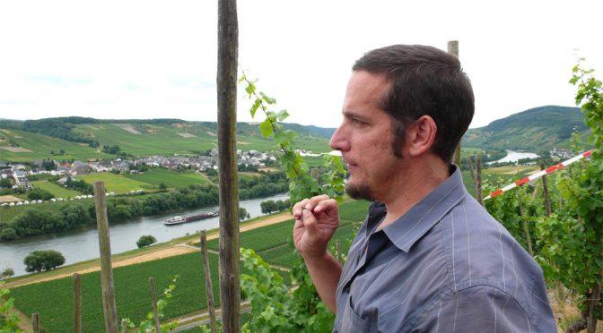 2016 Weingut Günther Steinmetz, Kestener Herrenberg Pinot Noir Unfiltriert, Mosel, Tyskland