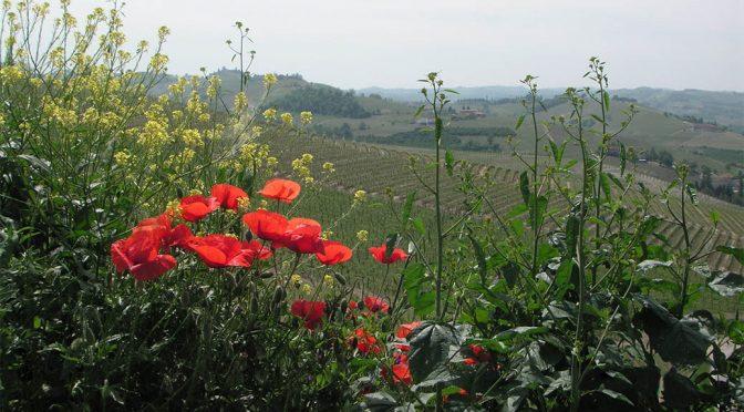 2014 G.D. Vajra, Freisa Kyè, Piemonte, Italien