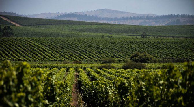 2017 Sur Andino, Mirla Bay Pinot Noir, Leyda Valley, Chile