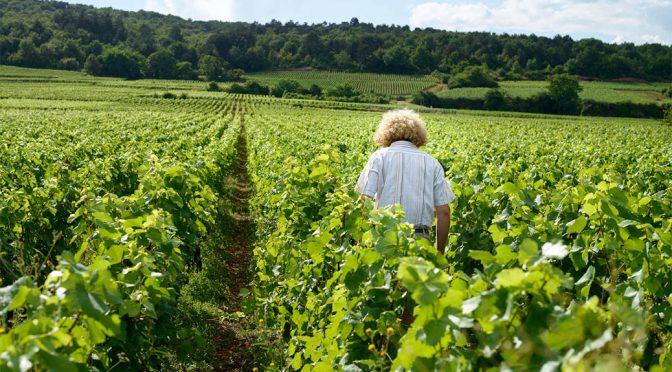 2017 Sylvain Pataille, Marsannay Les Longeroies, Bourgogne, Frankrig