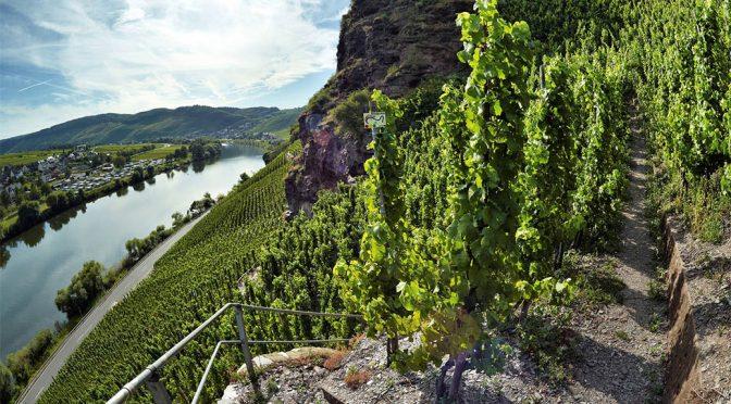 2016 Weingut Schmitges, Crémant Riesling Brut, Mosel, Tyskland