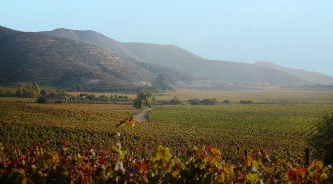 2017 Clos de Luz, Azuda Garnacha Blok 9 Hillside Vineyards, Cachapoal, Chile