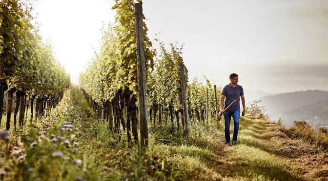 2017 Weingut Wöhrle, Lahrer Gottsacker Chardonnay GG, Baden, Tyskland