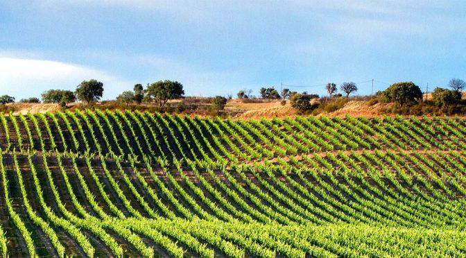 2018 Espaço Rural, Origens Vinho Branco, Alentejo, Portugal