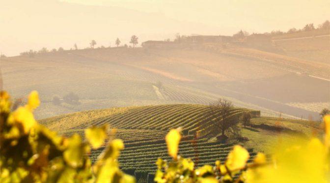 2013 G.D. Vajra, Barolo Ravera, Piemonte, Italien