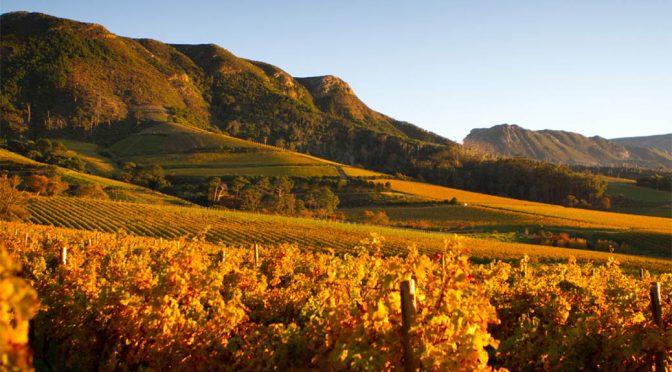2018 Klein Constantia, CV2 Special Selection Rosé, Western Cape, Sydafrika