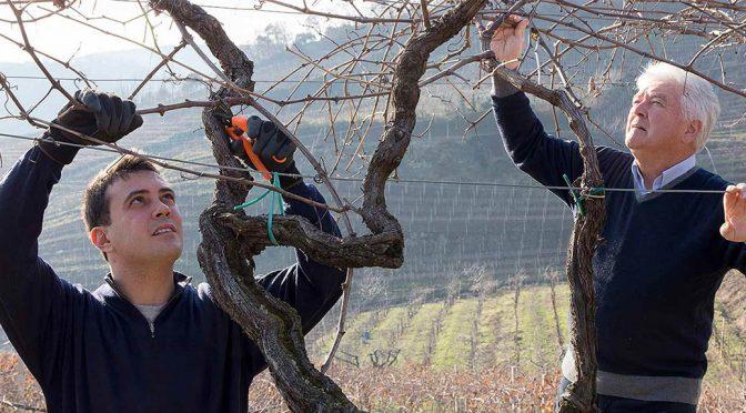 2012 Portinari, Soave Superiore Classico Ronchetto, Veneto, Italien