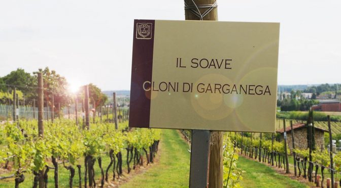 Houlberg i Soave – part 3: Lidt om de lokale druer, vine og mine erfaringer