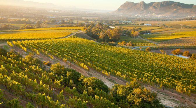 2017 Klein Constantia, CV2 Special Selection Sauvignon Blanc, Western Cape, Sydafrika