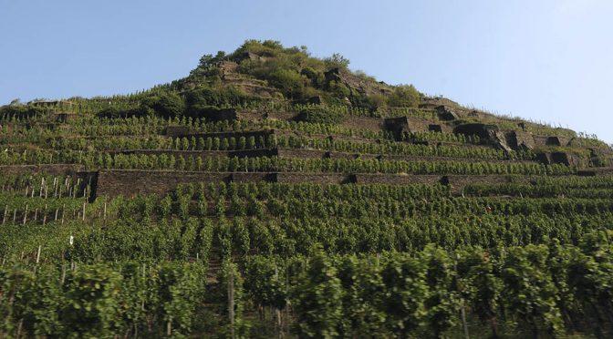 2015 Dagernova Weinmanufaktur, Dernauer Schieferlay Spätburgunder, Ahr, Tyskland