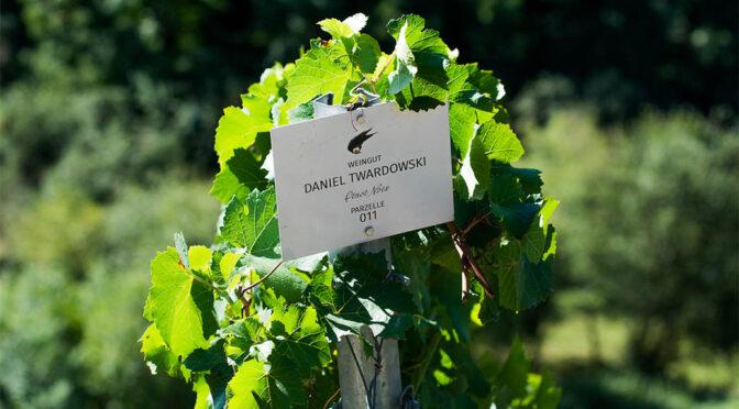 2018 Weingut Daniel Twardowski, Pinot Noix, Mosel, Tyskland
