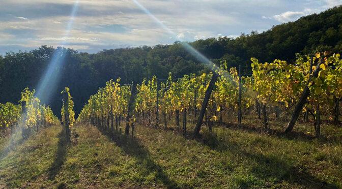2018 Domaine Barmès-Buecher, Pinot Noir Vieilles Vignes, Alsace, Frankrig
