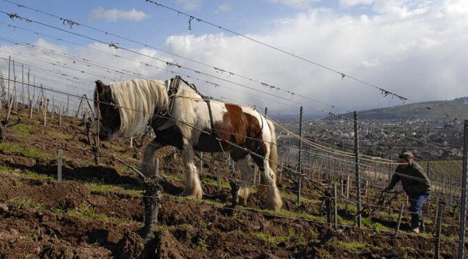2017 Domaine Zind-Humbrecht, Pinot Gris Heimbourg, Alsace, Frankrig