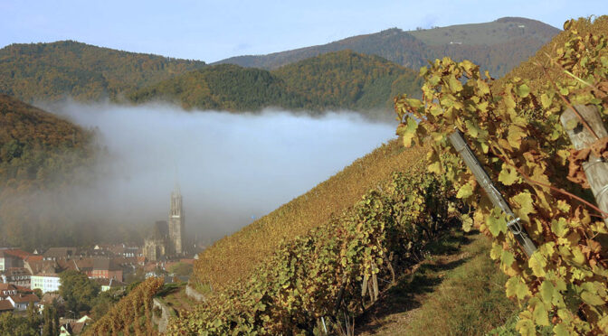 2017 Domaine Zind-Humbrecht, Pinot Gris Rotenberg, Alsace, Frankrig
